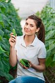 stock photo of cucumber  - Happy Young woman holding and eating cucumbers in a hothouse cultivated with green fresh cucumber plants - JPG