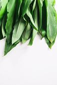 picture of ram  - Bunch of Fresh Green Rams Onion or Ramsoms A big ingredient in the New Nordic Culinary Arts and cuisine - JPG