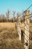 image of barbed wire fence  - barbed wire fence in a yellow field - JPG