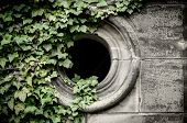 picture of mortuary  - Gothic window on the cemetery with ivyberry - JPG