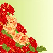 pic of hibiscus flower  - Flowering shrub red and yellow hibiscus floral background vector illustration - JPG