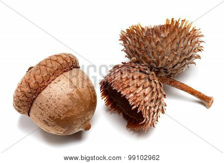 Autumn Acorns On White Background