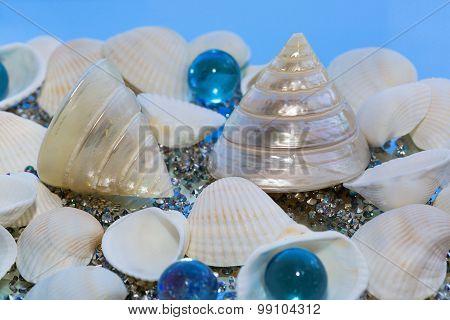 Sea Shells, Decorative Glass
