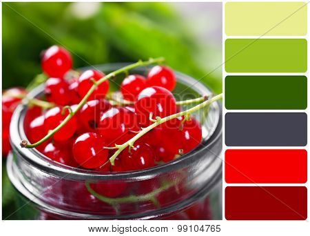 Fresh red currants in jar and palette of colors