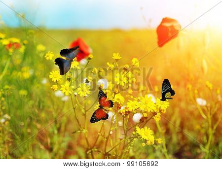Beautiful butterflies on meadow flowers