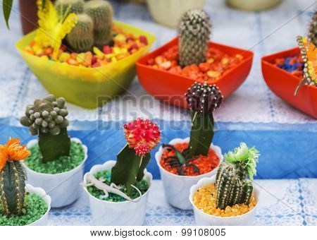 Cacti in colorful pots on Flower Fair
