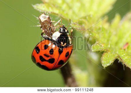 ladybird on a plant stem