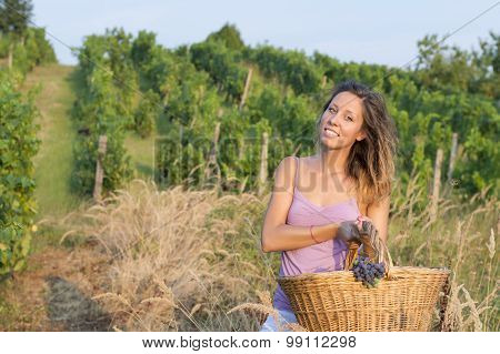 Young Brunette Girl In Grape Harvest With Big Wicker Basket For Storing Grapes