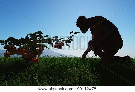 Monkey gathers fruits are not bushes