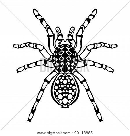 Zentangle stylized spider. Sketch for tattoo or t-shirt.