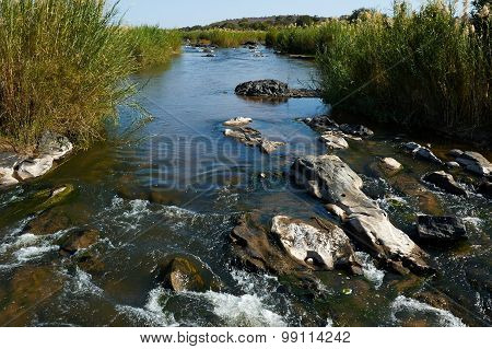 Beautiful River In South Africa