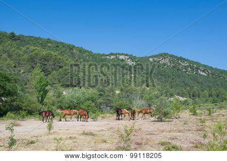 Flock brown horses in nature
