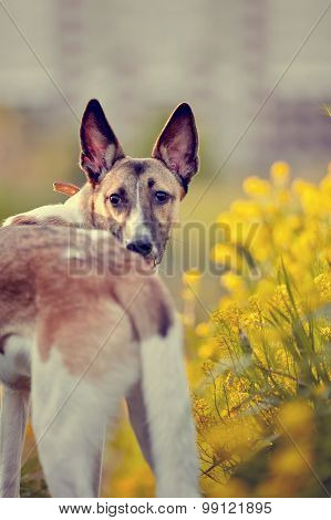 Portrait Of A Domestic Dog In Yellow Flowers.