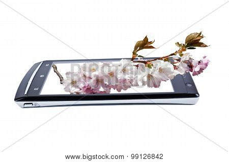 Flowering Cherry On Display Smartphone. Collage