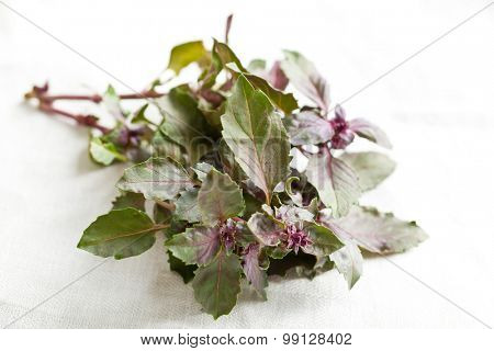 bunch of basil on white table