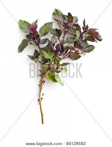 bunch of basil on white background
