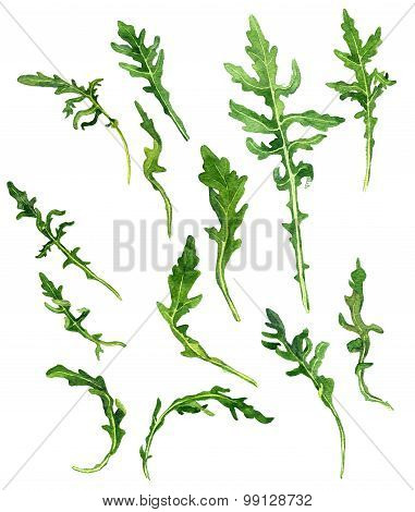 leaves of arugula