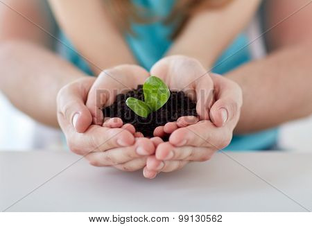 people, charity, family and ecology concept - close up of father and girl holding soil with green sprout in cupped hands at home