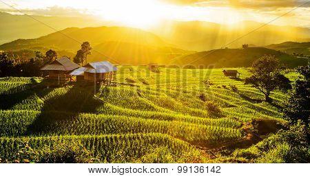 Terrace rice fields at Bann Bong Piang in Mae chaem, Chaing Mai, Thailand