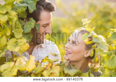 Two young happy vintners looking up from behind grape plants in the grape fields