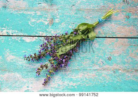 Beautiful Medical Herb Sage (salvia Officinalis) Bunch