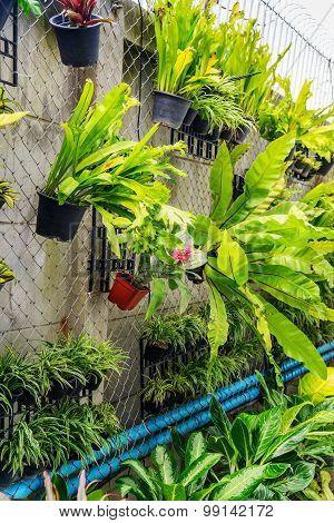 Plants pot hanging on wall