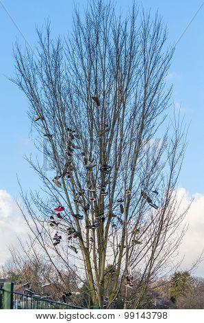 Old Schottischetraditon, Shoe Tossing Or Also Called Shoefiti.