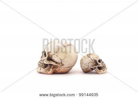 Human skull on isolated white background.