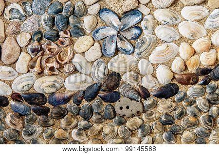 Close Up Of Sea Shells
