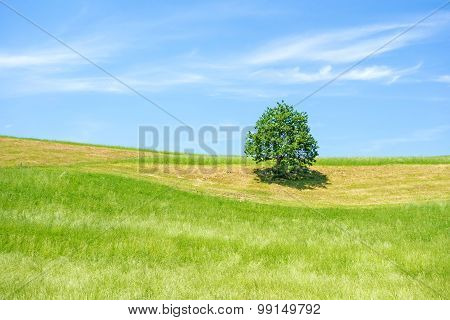 Green Farmland With Tree, Blue Sky