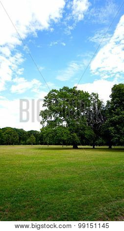 Tree In The Park With Blue Sky