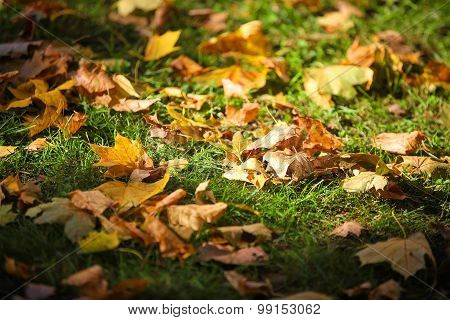 Colorful Foliage In Autumn