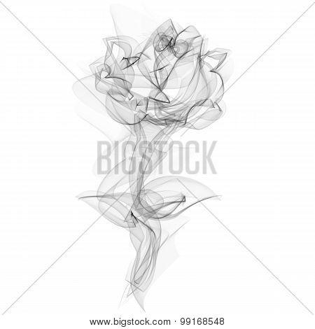 Realistic Smokey Rose Isolated on White