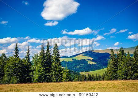 Rodnei mountains, Romania, in the summer