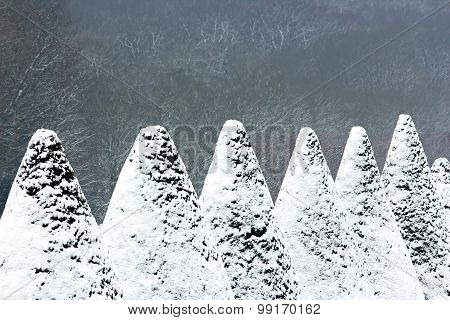 yew cones covered with snow. winter fir trees in a park in France