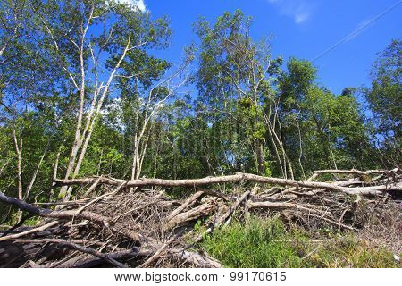 Deforestation logging environmental damage destruction of rainforest