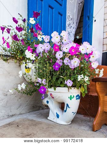 flowerbed  as the toilet