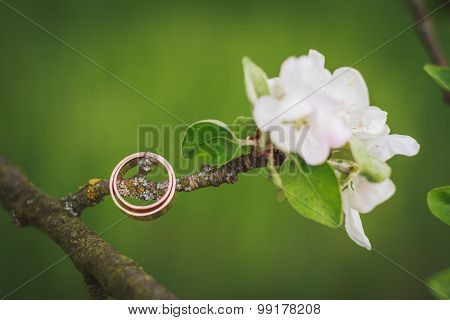 Gold Wedding Rings On The Blossom Branch