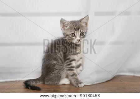 Cute gray kitten on floor at home