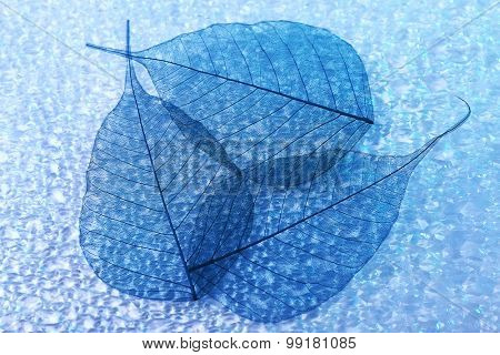 Abstract skeleton leaves background