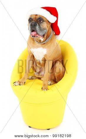Cute dog in Christmas cap, sitting in yellow armchair isolated on white background