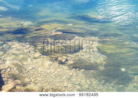 Image algae on bottom of a lake