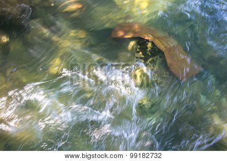 Photos algae on bottom of mountain stream