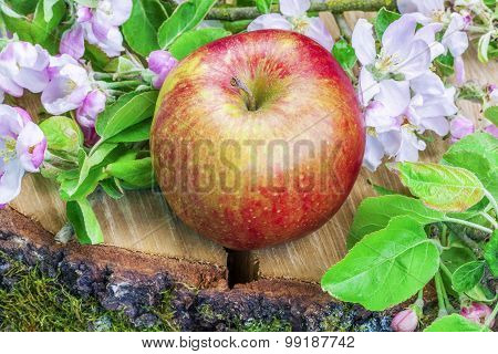 Apple with apple blossoms on wood