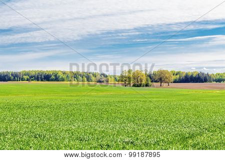 Landscape with the sky,forest and cereal field