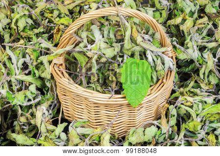 Dried pepper mint leaves in basket