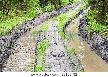 Deep rutted road through the forest
