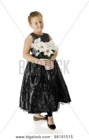 Full-length image of a dressed up elementary girl carrying a Christmas pot of poinsettias.  On a white background.