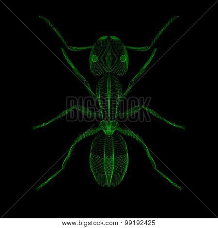 Ant. 3d style vector illustration for print tatto t-shirt.