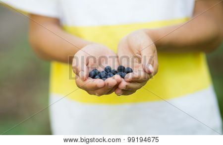 Freshly Picked Organic Blueberries In Boy's Hands